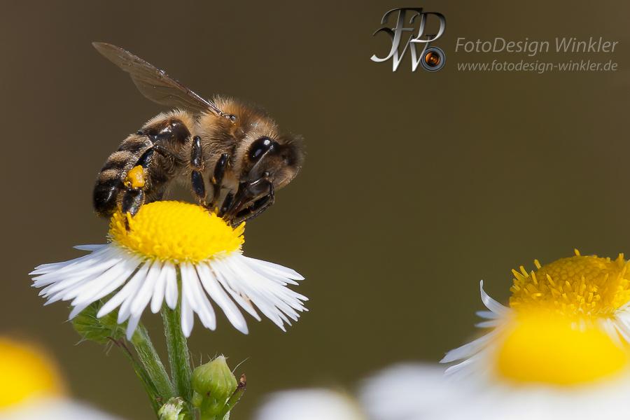 Bienenmakros